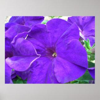 Flores púrpuras poster