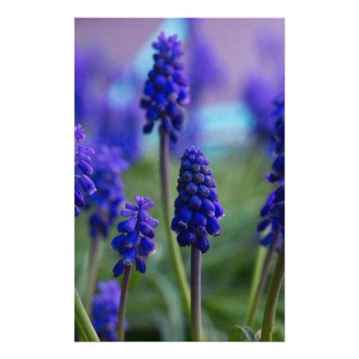 Flores púrpuras  papeleria
