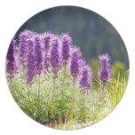 Flores púrpuras platos