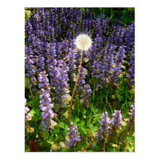 Flores púrpuras postales