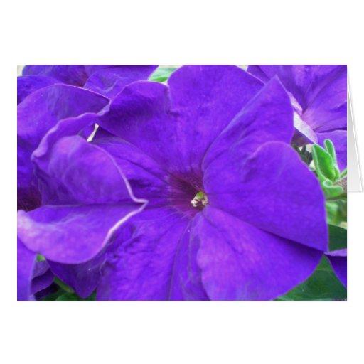 Flores púrpuras tarjeta
