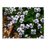 Flores púrpuras tarjeta postal