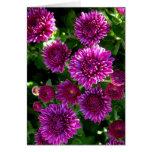 Flores púrpuras tarjetas