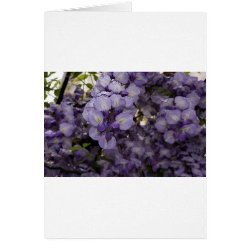 Flores púrpuras tarjeton