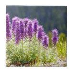 Flores púrpuras tejas  cerámicas