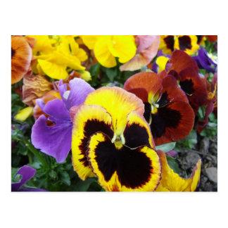 Flores púrpuras y amarillas del pensamiento postal
