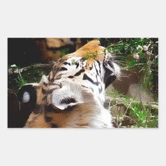 Flores que huelen del tigre pegatina rectangular