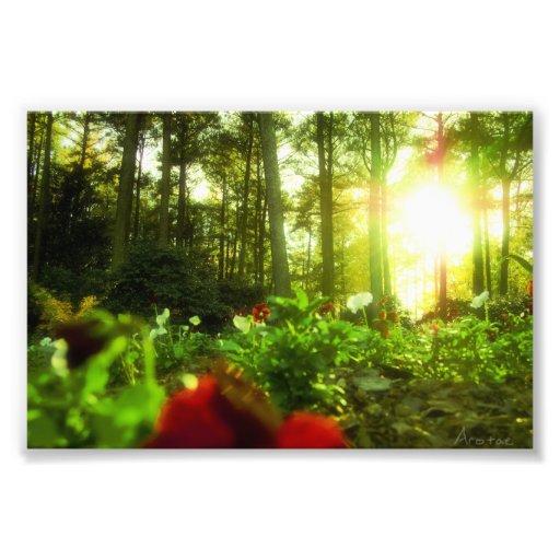 Flores que toman el sol impresión fotográfica