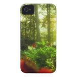 Flores que toman el sol iPhone 4 protectores