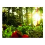 Flores que toman el sol tarjeta postal