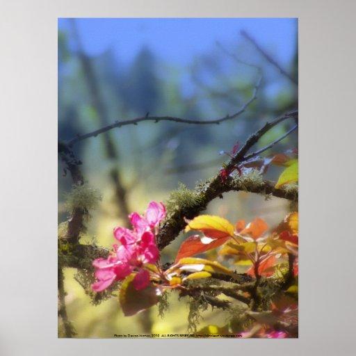 """flores """"radiantees"""" rojos #10 de la manzana de can impresiones"""