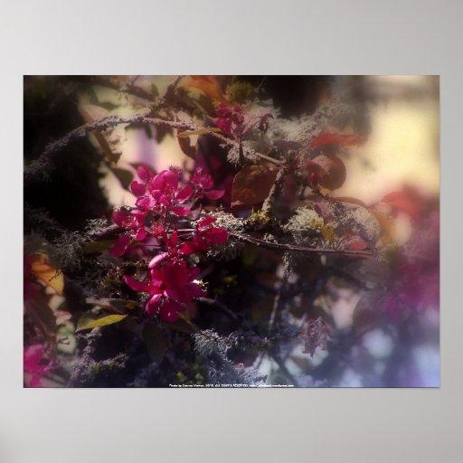 """flores """"radiantees"""" rojos #2 de la manzana de cang póster"""