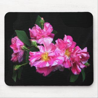 Flores rayadas rosadas de la rosaleda alfombrilla de ratón