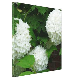 Flores redondas blancas del allium impresión en lienzo