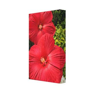 Flores resistentes del hibisco (moscheutos del hib lienzo envuelto para galerías