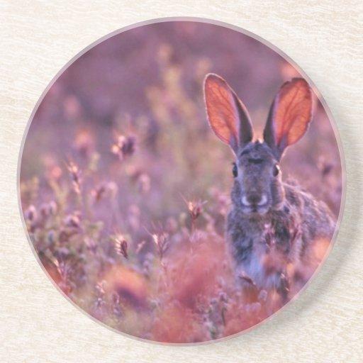 Flores retroiluminadas del rosa del conejo de rabo posavasos manualidades