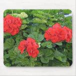 flores rojas alfombrillas de ratones