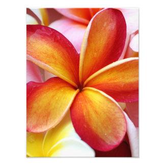 Flores rojas amarillas de Hawaii del Frangipani Cojinete