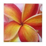 Flores rojas amarillas de Hawaii del Frangipani de Azulejo Ceramica