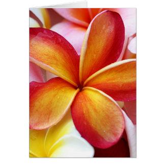 Flores rojas amarillas de Hawaii del Frangipani de Tarjeta Pequeña