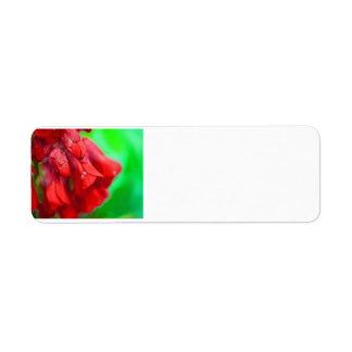 Flores rojas bonitas etiquetas de remite
