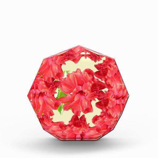 Flores rojas brillantes del hibisco