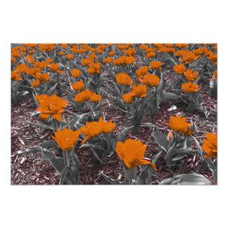 Flores rojas cojinete