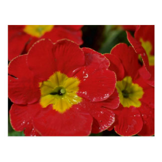 Flores rojas con las flores amarillas de los centr tarjeta postal