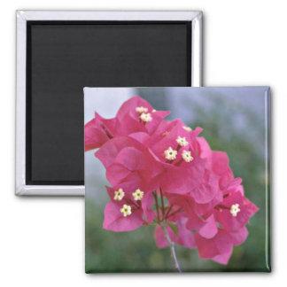 Flores rojas con las flores de los estambres de la iman para frigorífico