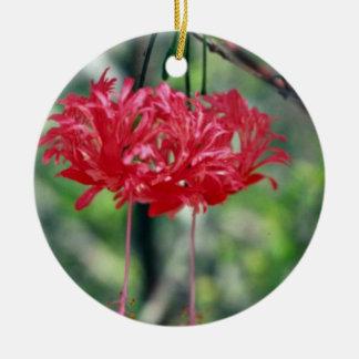 Flores rojas con las flores largas de los estambre ornato