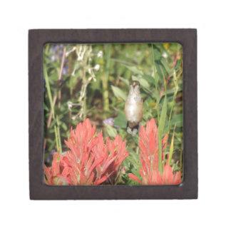 flores rojas coralinas del colibrí caja de recuerdo de calidad