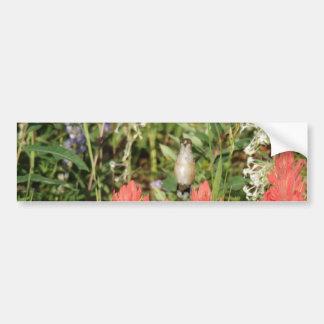 flores rojas coralinas del colibrí pegatina para auto