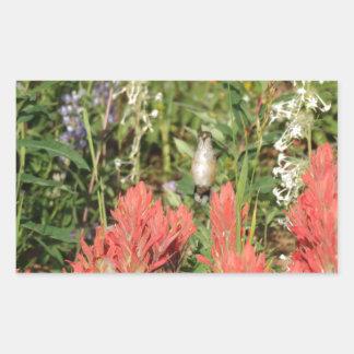 flores rojas coralinas del colibrí pegatina rectangular