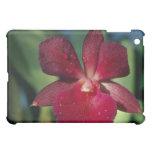 Flores rojas de Circinatum (Epidendrum)