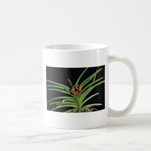 Flores rojas de Juana Ono (Ascocenda) Taza De Café