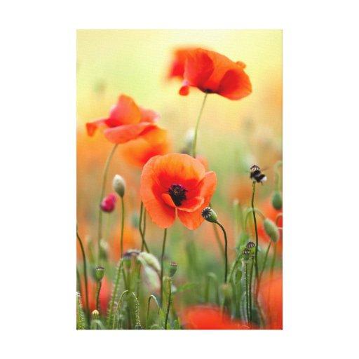 Flores rojas de la amapola impresiones de lienzo
