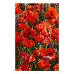 Flores rojas de la amapola  papeleria