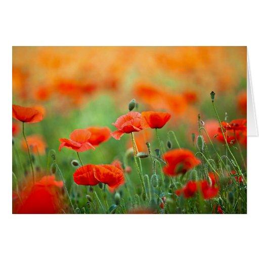 Flores rojas de la amapola tarjeta de felicitación