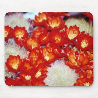 Flores rojas de la bola del escarlata del cactus alfombrillas de ratones