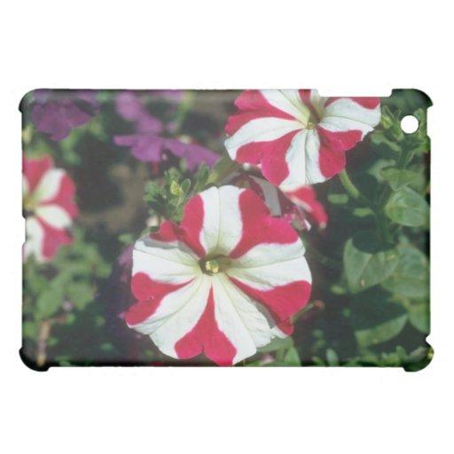 Flores rojas de la petunia del jardín (petunia Hyb