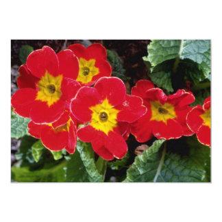 Flores rojas de los primulas del escarlata invitaciones personales