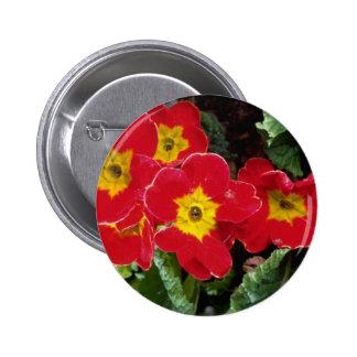 Flores rojas de los primulas del escarlata pin