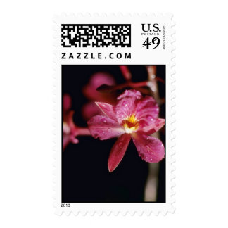 Flores rojas de Sanguinea (Broughtonia) Franqueo