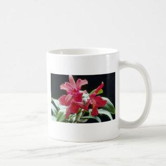 Flores rojas de Schillerana (Cattleya) Taza Básica Blanca