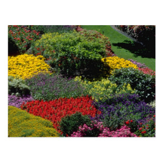 Flores rojas del ajuste del jardín postales