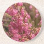 Flores rojas del brezo posavasos personalizados