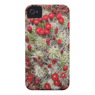 Flores rojas del cactus, Utah, los E.E.U.U. iPhone 4 Funda