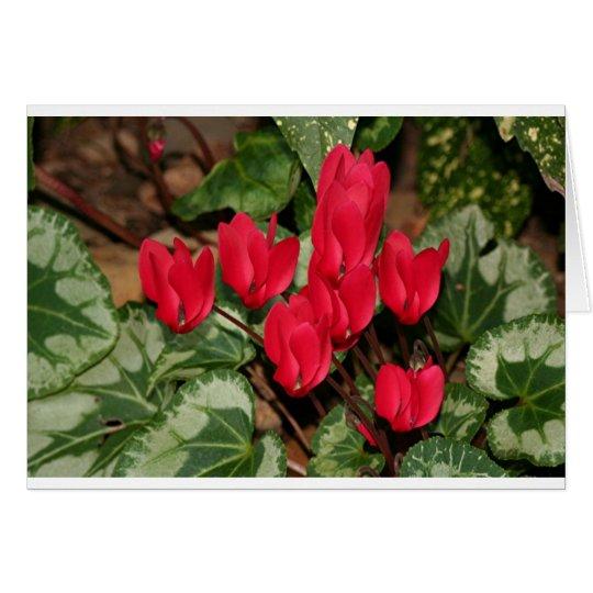 Flores rojas del Cyclamen en la floración Tarjeta De Felicitación