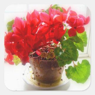 Flores rojas del Cyclamen Pegatina Cuadrada