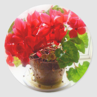 Flores rojas del Cyclamen Pegatina Redonda